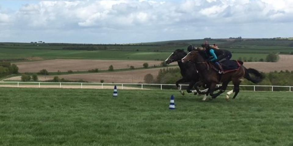 Golden Force on gallops